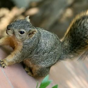 'Attack squirrel' found high on meth in US police raid
