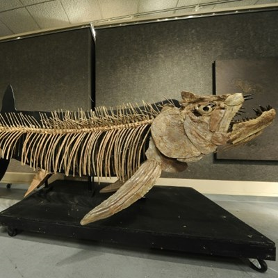 Fossil of giant 70m year-old fish found in Argentina