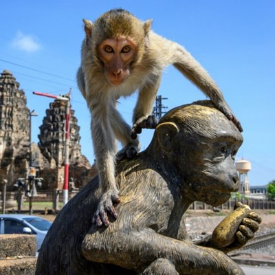 Macaque attack: humans try to take back Thai city from monkeys