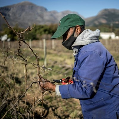 South Africa's wine industry reels from alcohol bans