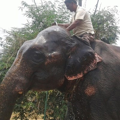 Truncated will: India landowner bequeaths land to elephants
