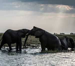 Fierce divide as Botswana lifts hunting ban