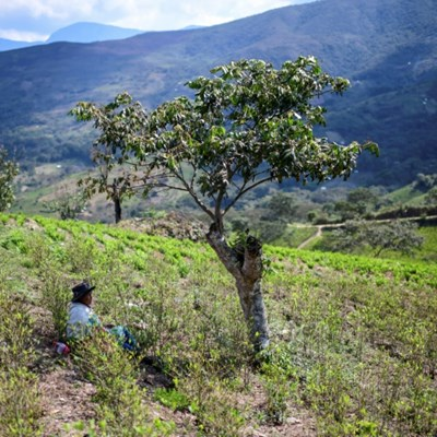 Indigenous Bolivian coca farmers fear return of 'abusive' Morales