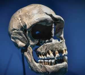 DNA from Neanderthals can make Covid more severe