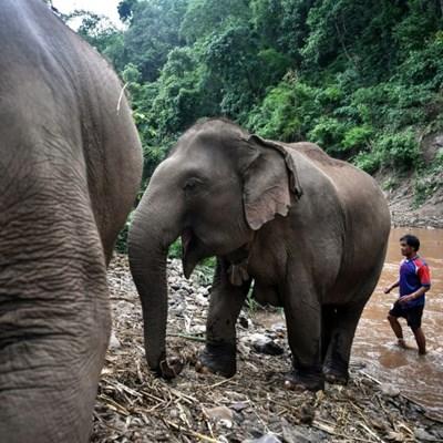Thai elephants' mass migration to village brings new stress