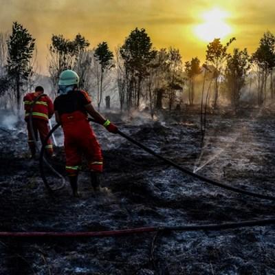 Forest fires destroying vital buffer against climate change