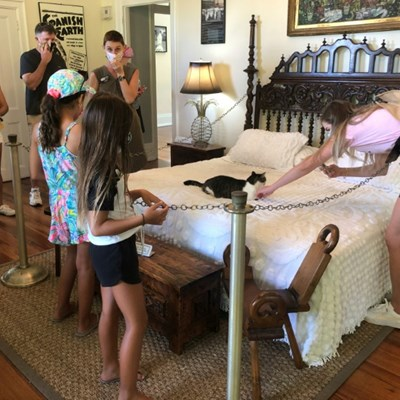 Mutant cats still a draw at Hemingway's virus-hit Florida home