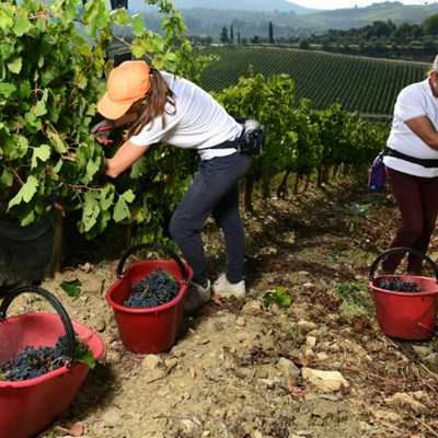 Italy's 'Black Roosters' fight back as virus hit wine sales