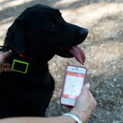 Mobile tech is going to the dogs... literally