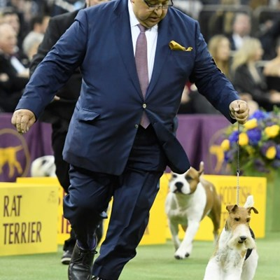 Wire Fox Terrier named Westminster's 'Best in Show'