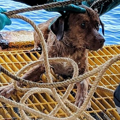 Dog pulled from rough seas 220 kms off Thai coast to be adopted by rescuer