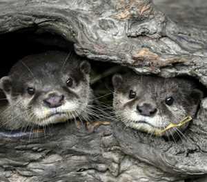 Baby boom at Taipei Zoo lightens pandemic blues