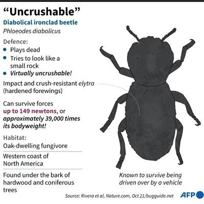 Scientists find secret to 'uncrushable' bug's strength