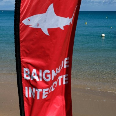 Suspected fatal shark attack in New Caledonia