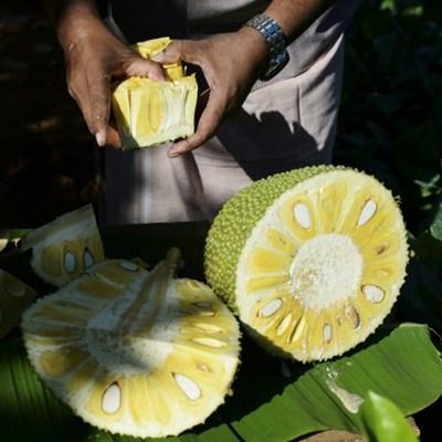 India's 'superfood' jackfruit goes global