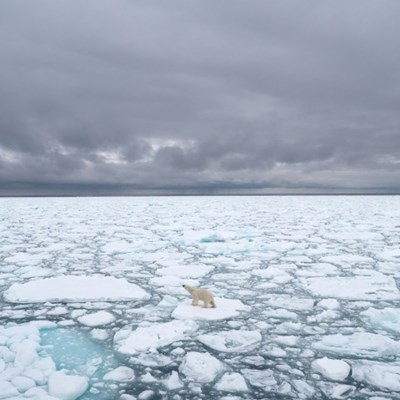 Polar bears forced to forage eggs as warming shrinks hunting grounds