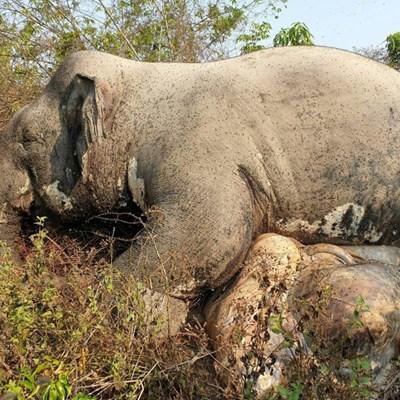 Poachers kill elephant in Cambodia wildlife sanctuary