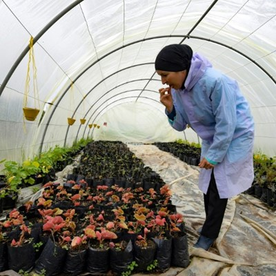 Market for edible flowers blossoms in Tunisia
