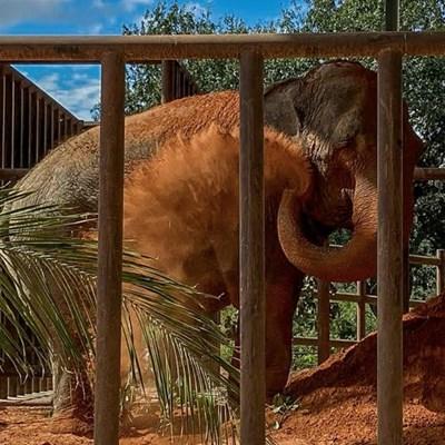 Mara the ex-circus elephant retires to Brazil