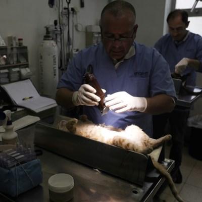 Jerusalem's dilemma over hordes of stray cats