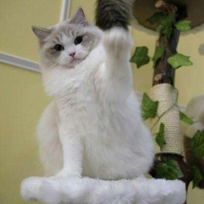 'Pregnant' cat burglar smuggled kittens through Taiwan airport