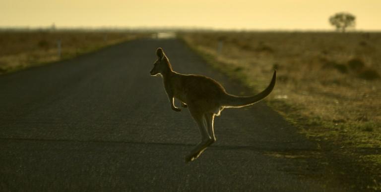 sports shoes 6ce93 51e0d Australian teen 'deliberately' mowed down, killed 20 ...