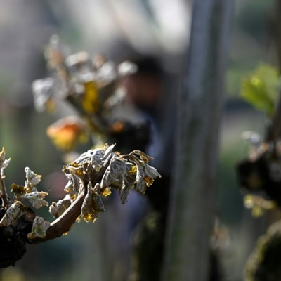 French growers feel the pinch as cold snap wrecks crops