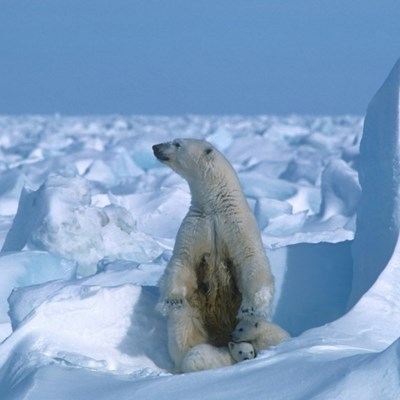 Arctic summer sea ice second lowest on record: US researchers