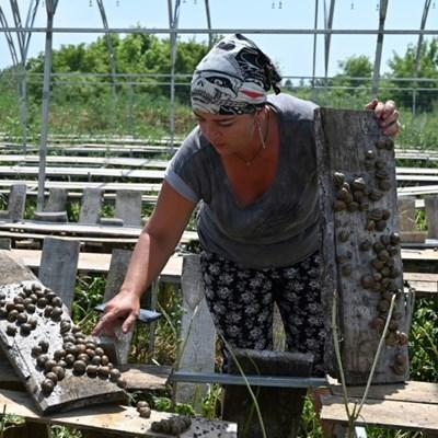 Ukraine's snail farmers fear collapse over EU lockdowns