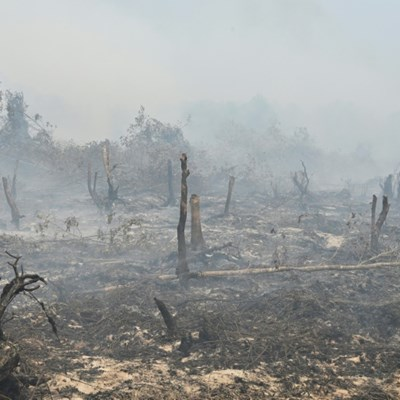 Indonesia hit with $5.2 billion in forest-fire losses: World Bank
