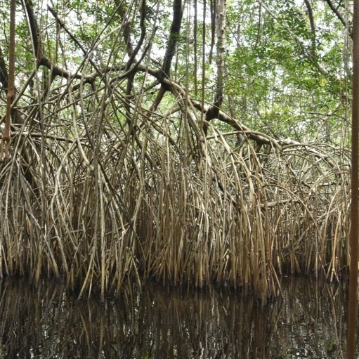 Wetlands disappearing 3 times faster than forests: Study