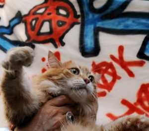 Istanbul vets make city's stray animals feel at home