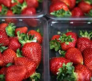 Strawberry saboteur evades Australia police