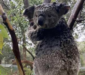 Rain brings joy for Australian firefighters, farmers
