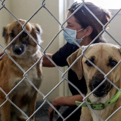 Ruff deal: Animal shelter braces for surge as expats abandon Qatar