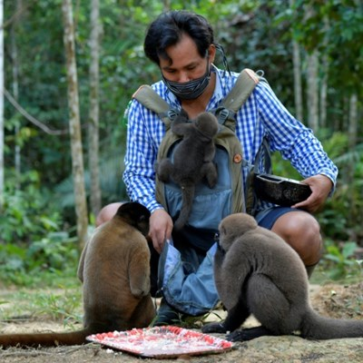 Saving the Amazon's orphan monkeys