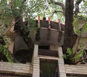 Indian family branches out with novel tree house