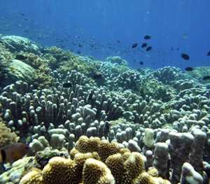 Climate change driving marine species poleward