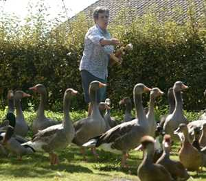 French ducks allowed to keep quacking... for now