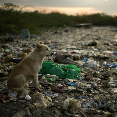 Bags and balloons: NGO documents plastic pollution choking sea life