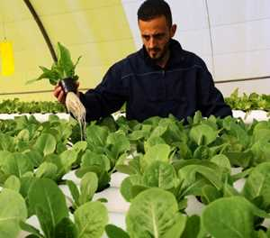 'Green Paradise' brings hydroponics to Libya