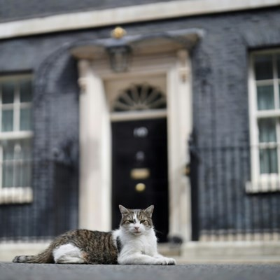 Larry the Cat marks 10 years' ruling Downing Street roost