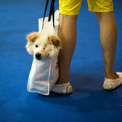 Chinese turn to social media to feed stranded pets in virus city