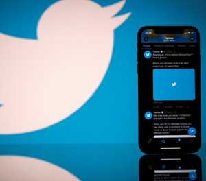 New bug discovery proves mite of Twitter