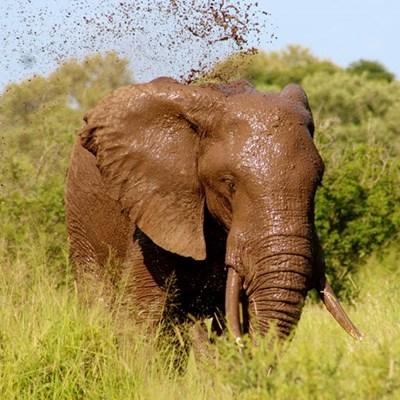Look, an elephant!