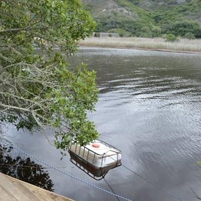 Houer in rivier bevat dalk dodelike gif