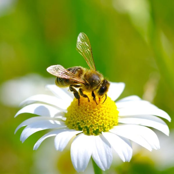 Keep your garden buzzing this World Bee Day