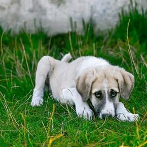 Hill's Pet Nutrition announces urgent recall