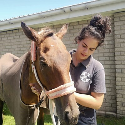 Lucky horse gets second chance