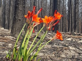 SCLI warns about invasive alien plants and wildfires